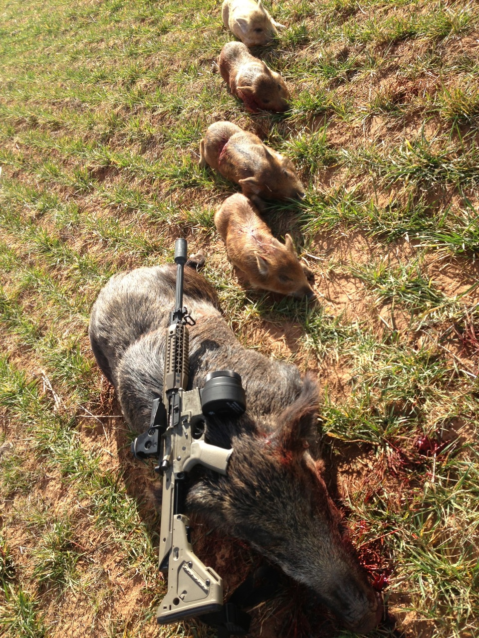 hog hunting from helicopter in texas with Helicopter Hog Hunt Slow Mo Kill Shots Video on 39979056 additionally Wild Hog Problem as well Helicopter Hog Hunt Slow Mo Kill Shots Video moreover Feral Hogs Root Familys Farm moreover Hipster t shirts 235383526990469597.