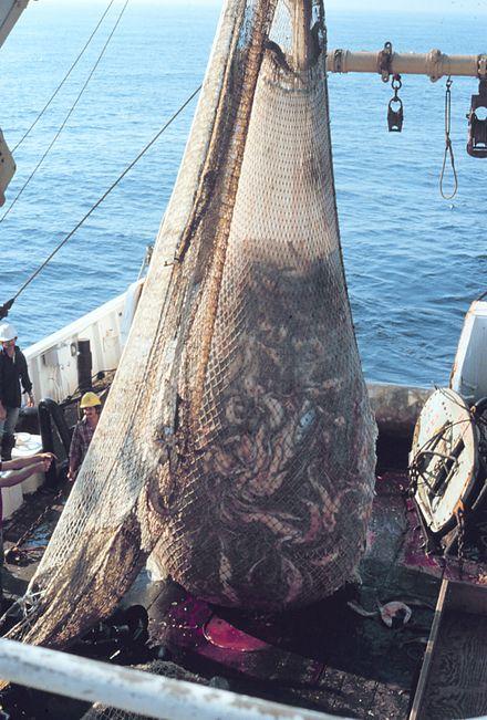 рыболовный трал что это такое