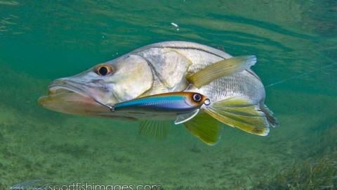 What is the best artificial lure?