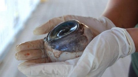 Mystery eyeball one of Gulf of Mexico's delightful oddities