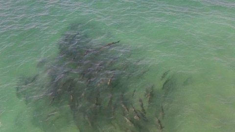 Tarpon fishing Boca Grande through the eyes of a drone (video)