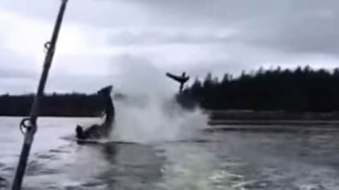 VIDEO : Killer Whale flips sea lion 20-feet in the air!