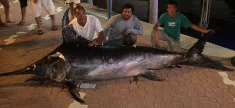 693-pound record swordfish caught off Florida