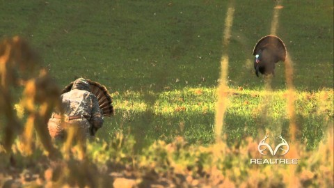 VIDEO : Extreme Close-Up Turkey Hunt