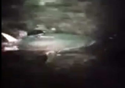 VIDEO : Police Officer Videos Giant Bluefin Tuna In Harbor