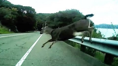 Video of Bike Rider Crashing Into Deer