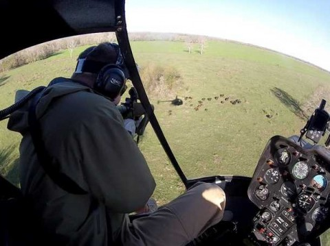 Helicopter Hunting Hogs With Machine Guns