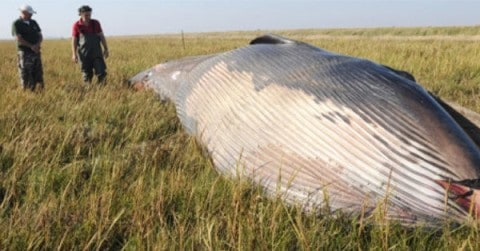 Mysterious Remains of a Whale Found in a Field in Utah – The True Story