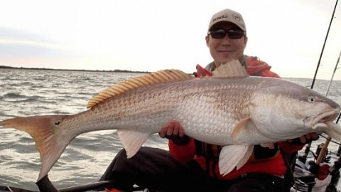 Giant Redfish – Ramblings of a Kayak Fishing Junkie