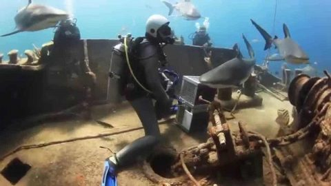 VIDEO – Shark asks divers for help!!!