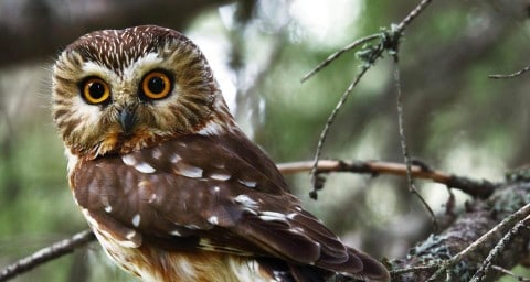 Renegade Owl Confronts Deputies, Flies Away