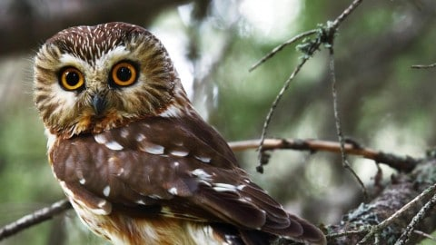 Renegade Owl Confronts Deputies, Flies Away