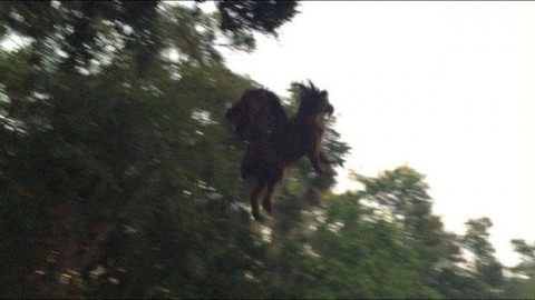Mythical 'Jersey Devil' monster finally caught on film … maybe