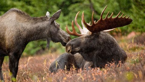 Hunters shoot two moose…before realizing they're in a zoo