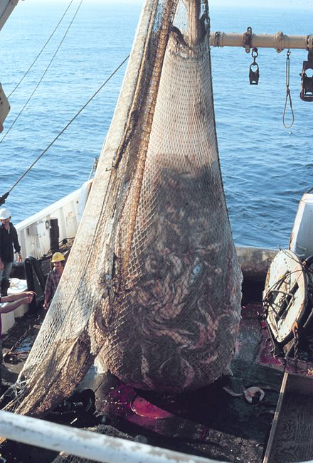 440px-Fish_on_Trawler