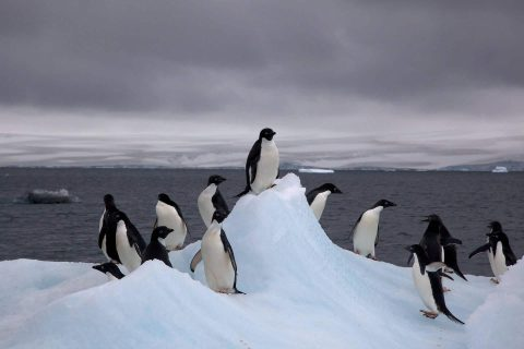 NASA – Antarctica gaining more ice than losing, challenging Climate Change report
