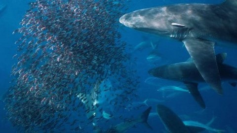 Video: Amazing footage of feeding frenzy