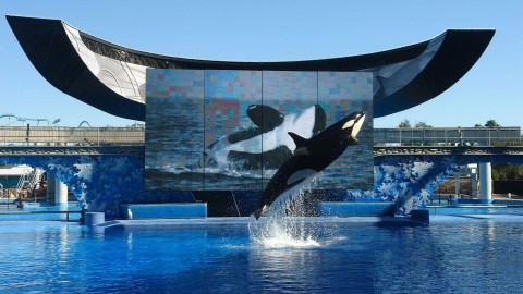 Sea World ending killer whale shows