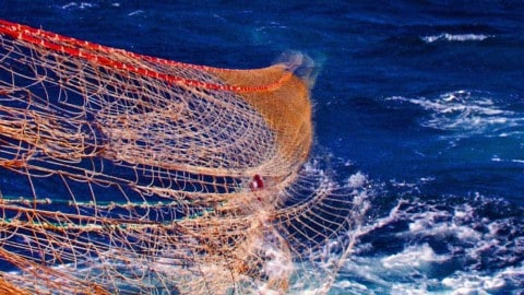 Trawling Less Devestating Than Portrayed Researchers Conclude