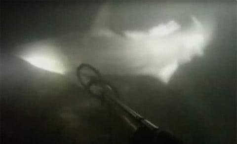 Violent Night Shark Dive Video is Stuff of Nightmares