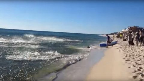 Video: Florida Shark Feeding Frenzy