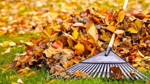 DO NOT rake your leaves, advice from National Wildlife Federation