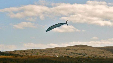 Insane Video of Wahoo Skying 30-feet on Kite Bait