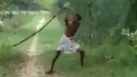 Dad Kills King Cobra With Bare Hands to Avenge Son's Death