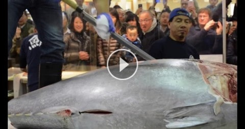 $10,000 Knife Sword Cuts Giant Bluefin Tuna Like Butter