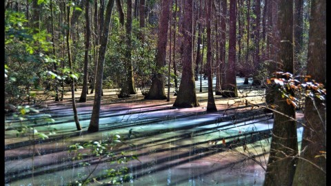 Viral Psychedelic Swamp Photo Defies Reality