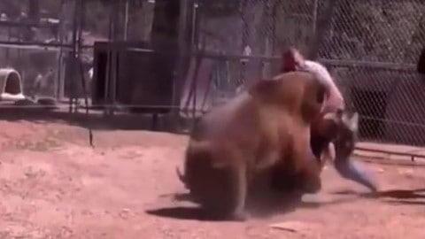 Extreme Animal Attacks on Humans
