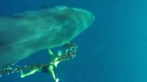 Heroic Sailor Dives into Ocean and Videos Rescue of 45-Foot Whale