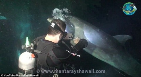 """Wild Dolphin """"Asks"""" Divers to Help Free Itself from Hook"""
