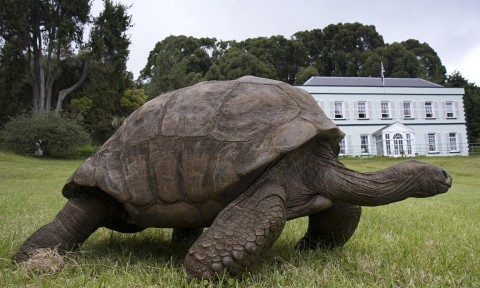 183 year old turtle goes on diet for a better life