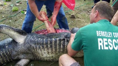 True Story Behind Vicious Gator Attack on Golf Course
