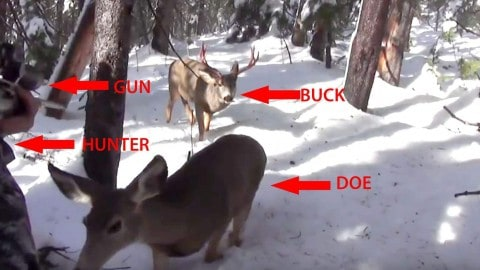 Big Buck and Doe Play Tag With Hunter and Win
