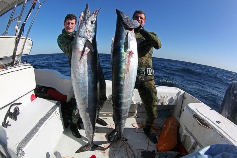 Giant Wahoo Spearing Maniacs Aren't Afraid of a Few Dozen Sharks