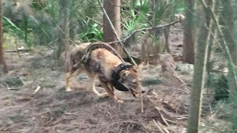 Man Captures Unbelievable Snake Attacking Coyote Photo