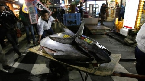 See the Insanely Expensive $1.76 Million Dollar Bluefin Tuna