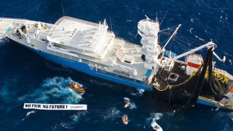 World's Largest Tuna Fishing Vessel Captures 6-Million Pounds of Tuna Per Trip