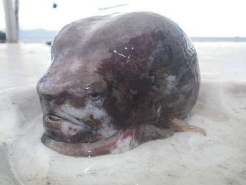 See the Mysterious Alien Head Fish That Defies Reality