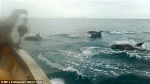 Hundreds of Dolphins Perform for Fishing Boat