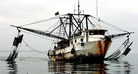 12 Commercial Fishermen Lose Fishing Privileges Over Illegal Activities
