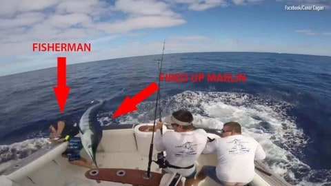 Fisherman Whacked, Almost Impaled By Leaping Marlin