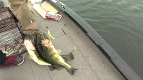 Catching 3 Bass at One Time on Video is as Awesome as it Sounds