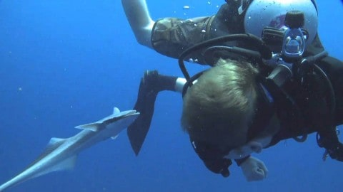 Friendliest Remore Ever Just Wants To Latch — on a Diver