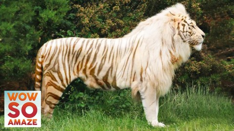 Top 5 Most Amazing Animal Hybrids