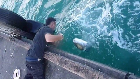 Video: Guy Catches Massive Fish with Just a Fishing Line