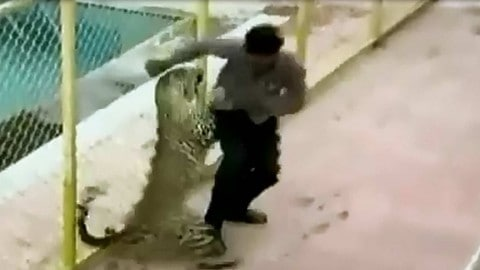 Video: Leopard Goes on Rampage in Indian School, Injures 6