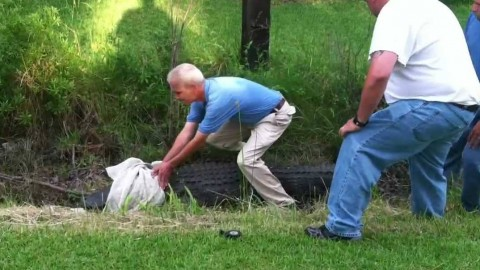 Overconfident Guy's First Attempt at Alligator Wrestling Could've Gone Better